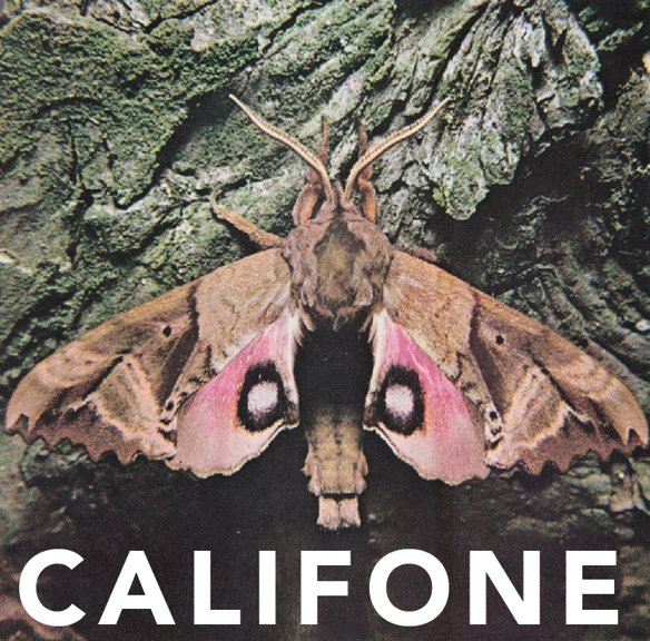 """Gallipoli Beirut: Califone Releasing """"Insect Courage"""" EP; Living Room Tour"""